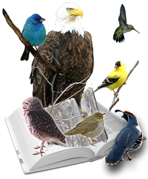 bird guide books